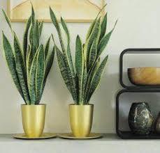 house plants no light the 25 best indoor plants low light ideas on pinterest indoor