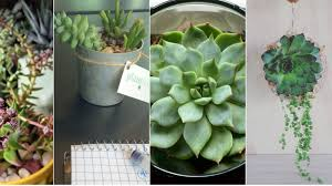 why succulents are the ideal houseplants you can u0027t kill no matter