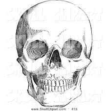 vector clip art of a retro black and white anatomical sketch of a