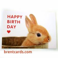 rabbit birthday bunny birthday card free card design ideas