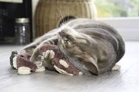 luxury cat products tigga towers