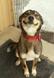 Smiling Dog Meme - 16 indícios de que sua vida é incompleta por não ter um cachorro