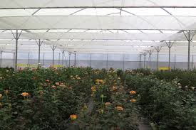 Harmony Greenhouse Dutch Suppliers Set Up Demoproject With Movable Screening Systems