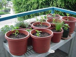 best 25 vegetable garden in containers ideas on pinterest