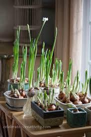 20 best indoor gardening images on pinterest gardening indoor