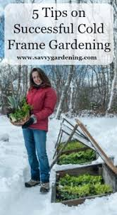 Herb Garden Winter - 12 crops perfect for winter gardening gardening hacks winter