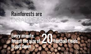deforestation facts for the world counts