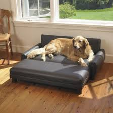 Sofa Bed For Dogs by Dog Beds That Look Like Furniture Dog Sofa Bed Orthopedic Dog