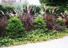 best 5 ornamental grasses for landscapes