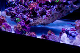 Reef Aquascape Unique Aquascaping Ideas Needed The Reef Tank