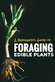 249 best foraging images on pinterest edible plants wild