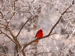 wallpaper with flowers and birds chinazawen gallery wallpaper with