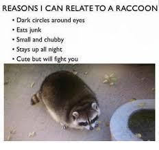 Racoon Meme - reasons i can relate to a raccoon dark circles around eyes eats