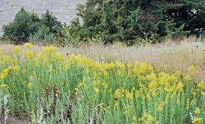 native nebraska plants the art garden september 2010