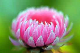 imagenes flores bellisimas las mas bellas flores del mundo fotos ecología taringa