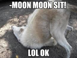 Wolf Meme - moon moon the dumb history of the dumbest dog meme
