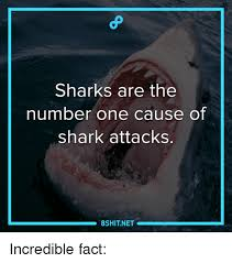 Shark Attack Meme - 25 best memes about shark attack shark attack memes