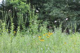 lexus flowers houston texas nature discovery center u2013 hana and arthur ginzbarg