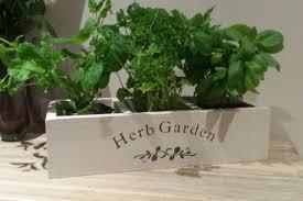 herbe cuisine jardinière en herbe jardinière en herbe cuisine boite à