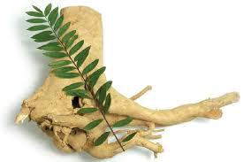 10 tanaman herbal tahan ereksi yang paling mudah didapat herbal