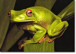 frog photorealistic pencil drawing by kirrily duff australian