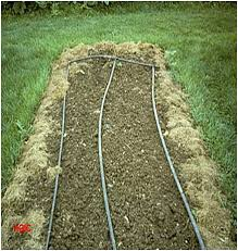 drip irrigation for vegetable gardens university of maryland