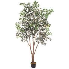silk trees plants flowers 7 foot ficus tree potted polyvore