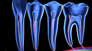 unexpected stem cell factories found inside teeth science aaas