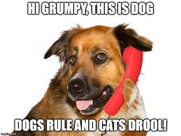 Dog Phone Meme - dog on the phone memes imgflip