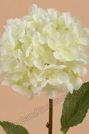 bulk hydrangeas bulk white hydrangea bulk hydrangea canada wholesale white