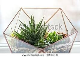 plants in glass jars garden in glass container air plants in glass
