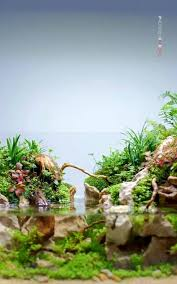 Aquascape Online 219 Best Aquascape Images On Pinterest Aquascaping Aquarium