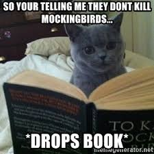 To Kill A Mockingbird Meme - cat to kill a mockingbird meme generator
