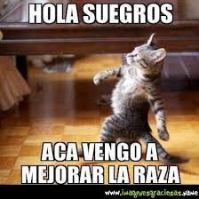 Memes De Cochiloco - unique memes de cochiloco cats mininos icos y dem磧s gatitos