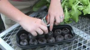 Greenhouse Starter Kits Growing With Jiffy Peat Pellet Greenhouses Youtube