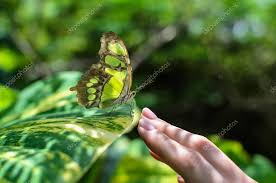 up colorful butterfly sitting on s stock photo