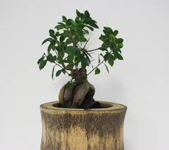 home office feng shui decor u0026 live plants out of the office