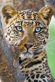 best 25 wild animals ideas on pinterest cute wild animals