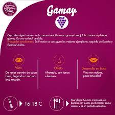 glã hbirne le design 14 best las cepas de los vinos images on wine