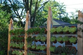 potted plants for patio home outdoor decoration