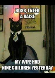 Cat Facts Meme - all about tuxedo cat facts personality child cat and animal