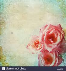 vintage shabby chic background with roses stock photo royalty