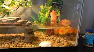 10 gallon turtle tank youtube