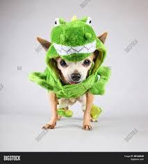 a cute chihuahua dressed up in a green dinosaur or a lizard