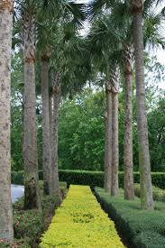 plants native to florida 33 best beautiful trees images on pinterest flowering trees