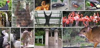 Hong Kong Zoological And Botanical Gardens Zoo Asp