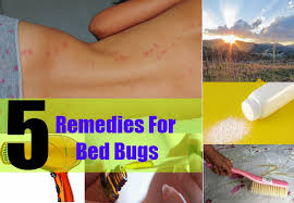 Remedy For Bed Bug Bites Home Remedies For Bed Bugs Natural Treatments U0026 Cure For Bed