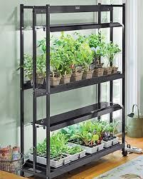 best grow lights for vegetables 32 best tomato grow lights images on pinterest grow lights