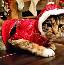 sweaters for cats shudder at these pictures of cats wearing sweaters