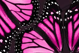 pink monarch butterfly wings fabric bonnie phantasm spoonflower